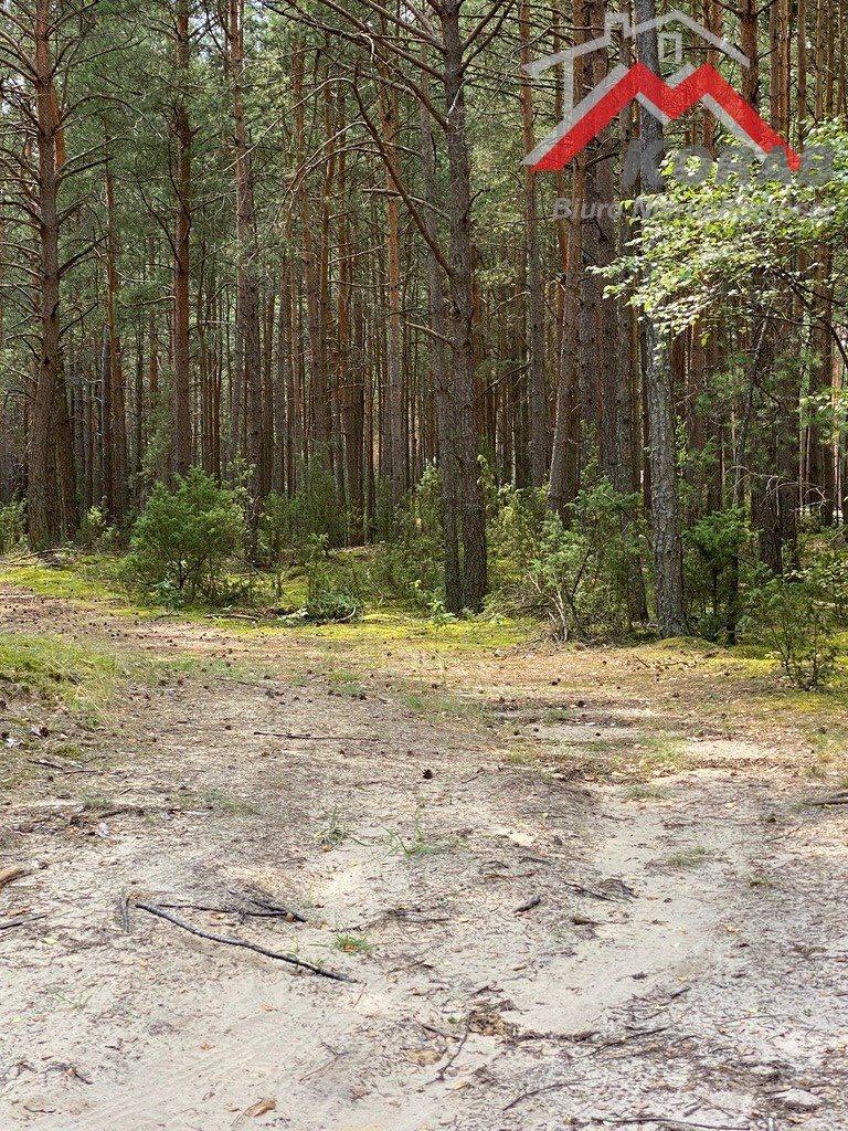 Działka leśna z prawem budowy na sprzedaż Łosie  2810m2 Foto 1