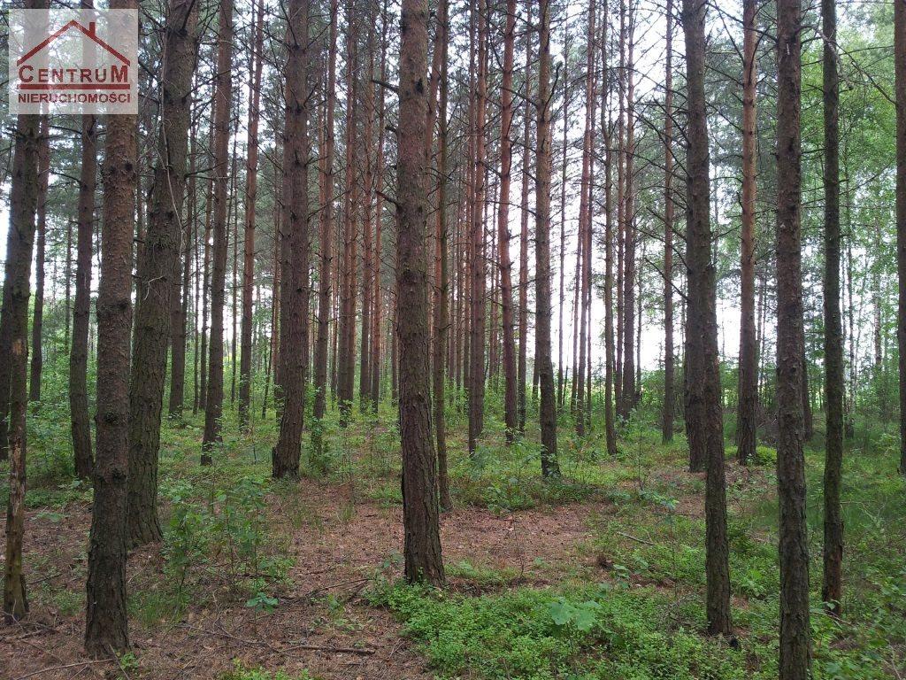 Działka leśna na sprzedaż Brzozowy Kąt  15375m2 Foto 1