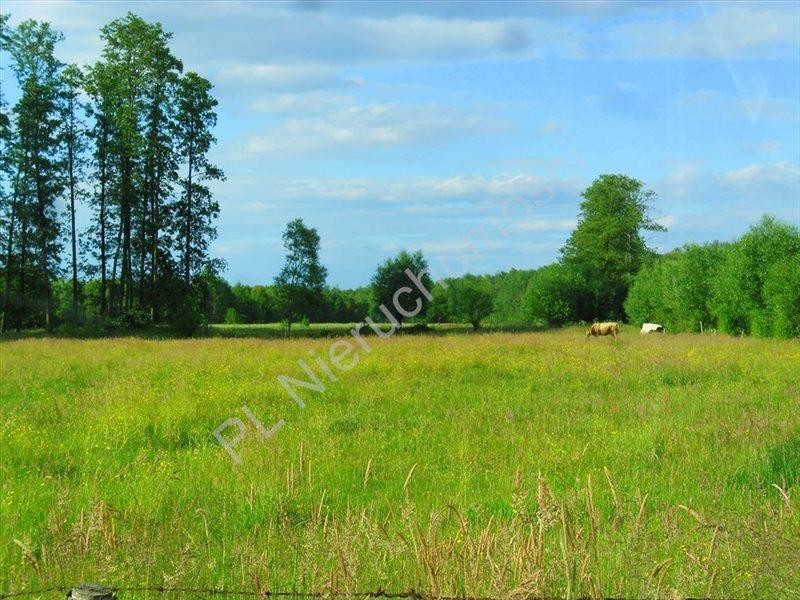 Działka rolna na sprzedaż Choiny  20300m2 Foto 1