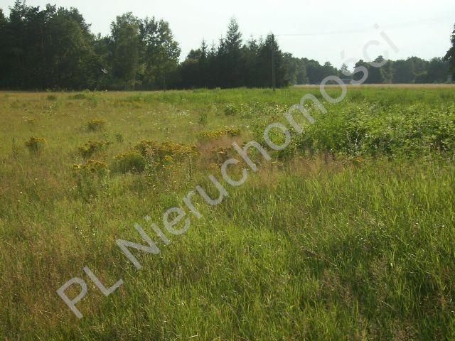 Działka rolna na sprzedaż Stare Budy  1500m2 Foto 1
