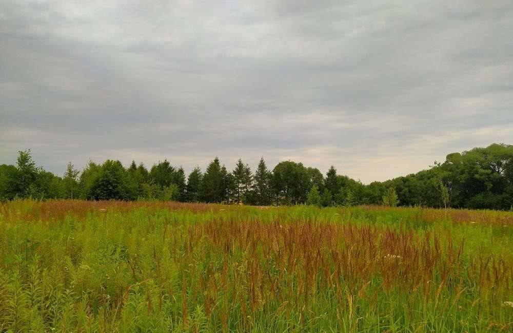 Działka rolna na sprzedaż Lipowa  7100m2 Foto 6