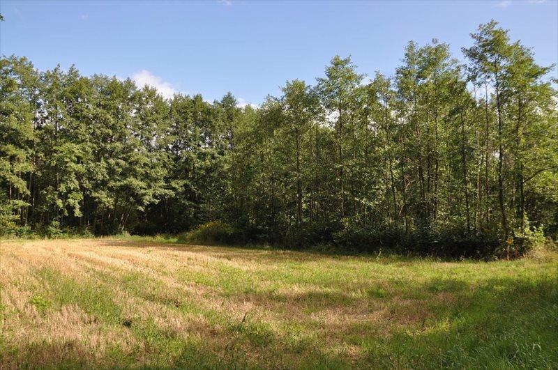Działka rolna na sprzedaż Sulistrowice  4100m2 Foto 4