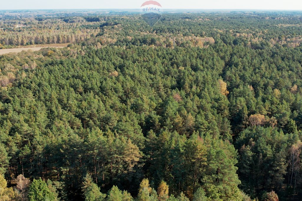 Działka leśna z prawem budowy na sprzedaż Czarnówka  15000m2 Foto 6