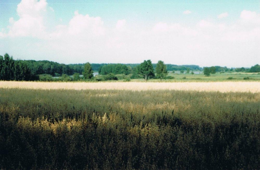 Działka siedliskowa na sprzedaż Myślibórz  125000m2 Foto 2