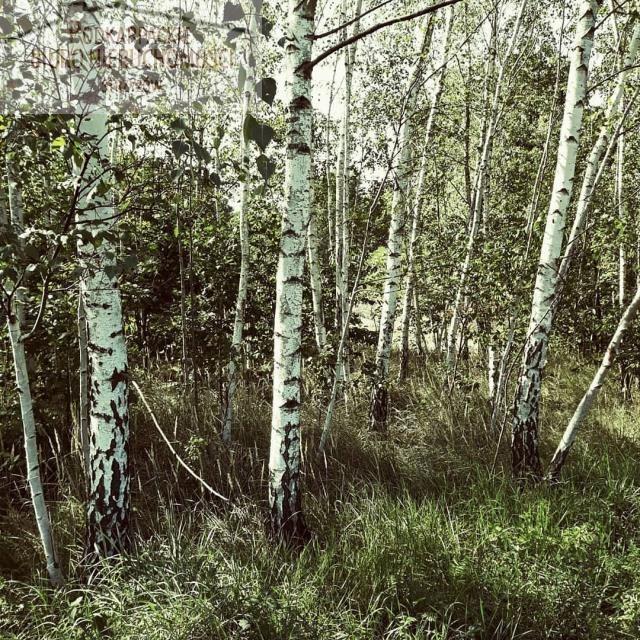 Działka leśna na sprzedaż Żyznów  3400m2 Foto 1