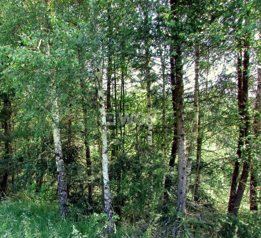 Działka leśna na sprzedaż Harta, Harta, Harta  14266m2 Foto 7