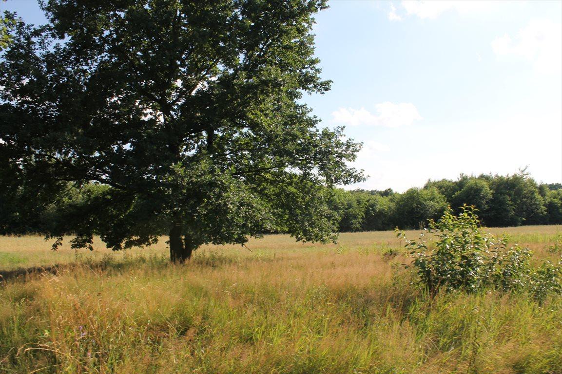 Działka rolna na sprzedaż Łagiewniki Nowe  9500m2 Foto 14