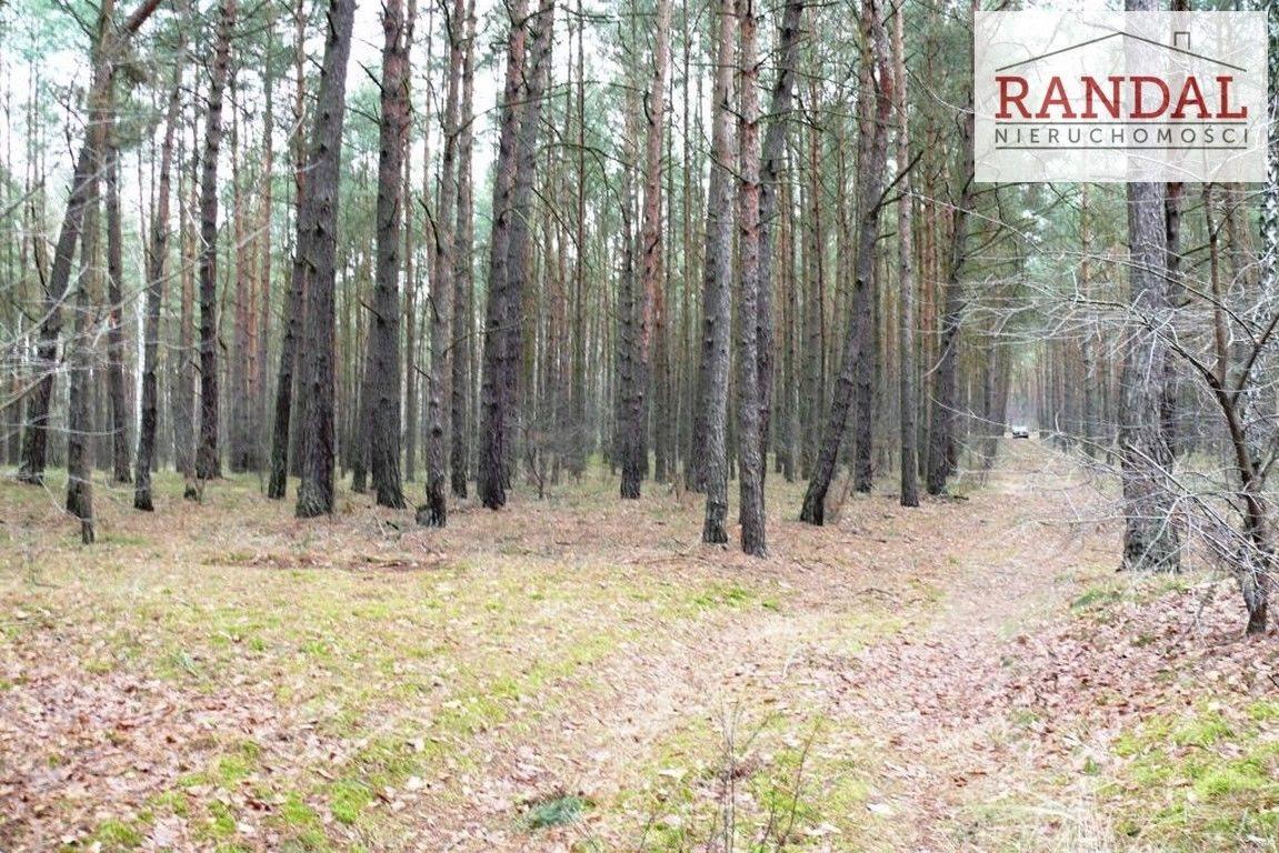Działka leśna na sprzedaż Młodzikówko  107010m2 Foto 3