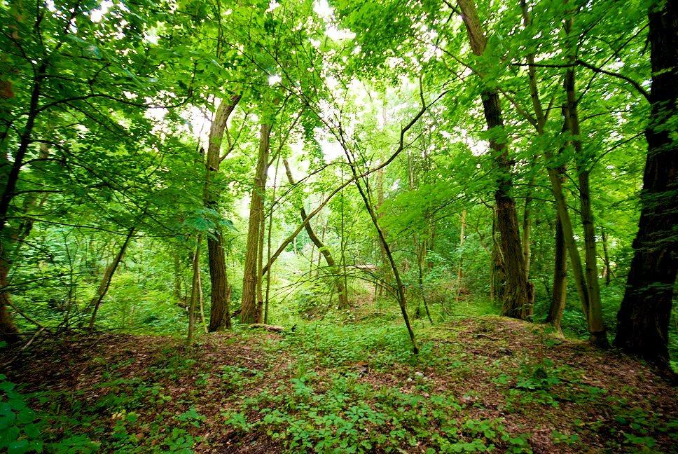 Działka leśna na sprzedaż Grodzanów  46000m2 Foto 7