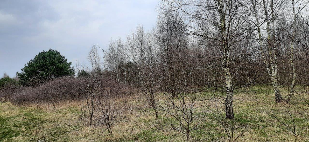 Działka rolna na sprzedaż Słubica-Wieś  3651m2 Foto 3
