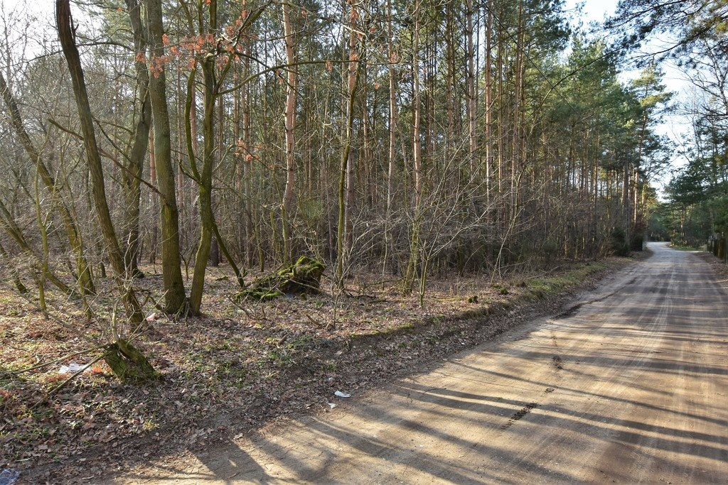 Działka leśna z prawem budowy na sprzedaż Nowy Świat  2770m2 Foto 3