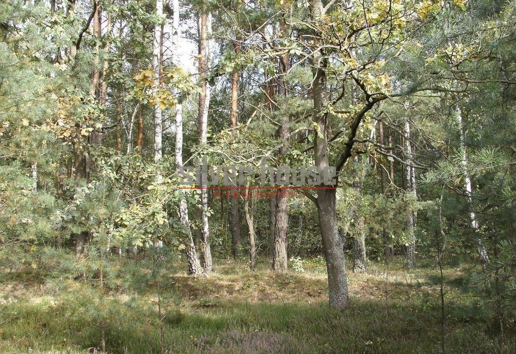 Działka siedliskowa na sprzedaż Boryszew  15000m2 Foto 2
