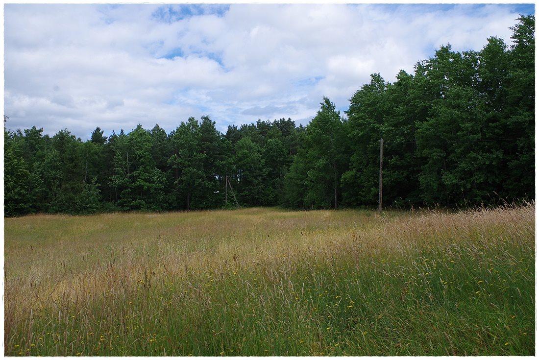 Działka rolna na sprzedaż Linia, Dębowa  12607m2 Foto 11