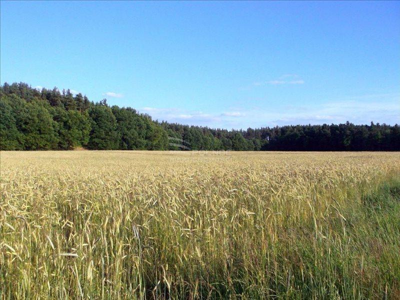 Działka leśna na sprzedaż Parzyce  25800m2 Foto 3