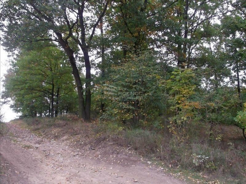 Działka leśna na sprzedaż Bolesławiec, Zabobrze  21908m2 Foto 6