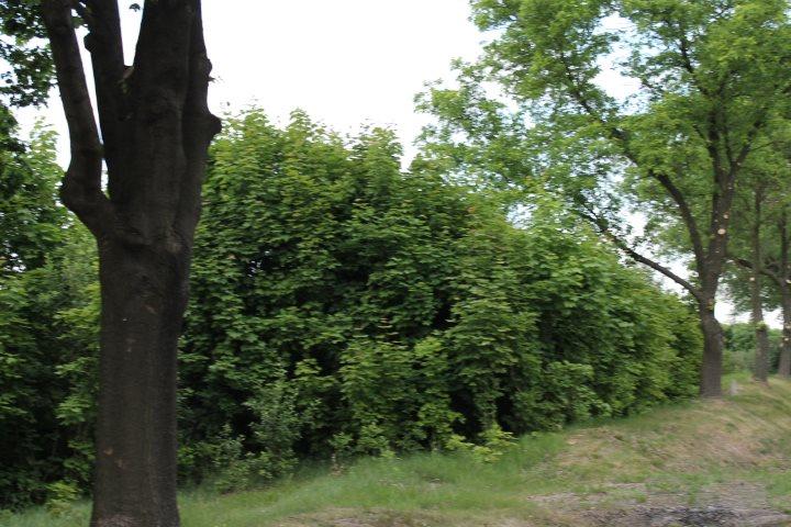 Działka rolna na sprzedaż Skotniki  17600m2 Foto 6