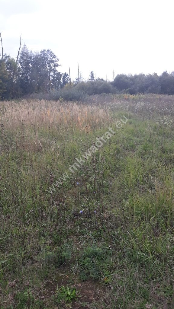 Działka siedliskowa na sprzedaż Piaseczno  6311m2 Foto 1