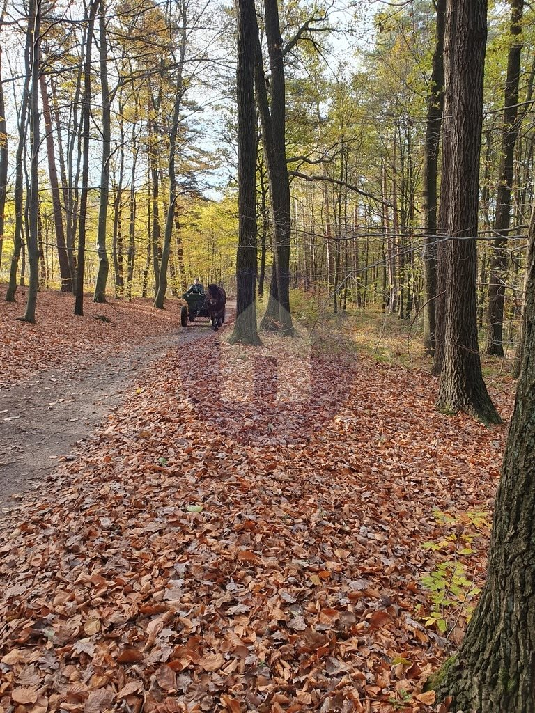 Działka leśna na sprzedaż Sobótka, Przełęcz Tąpadła  2551m2 Foto 2