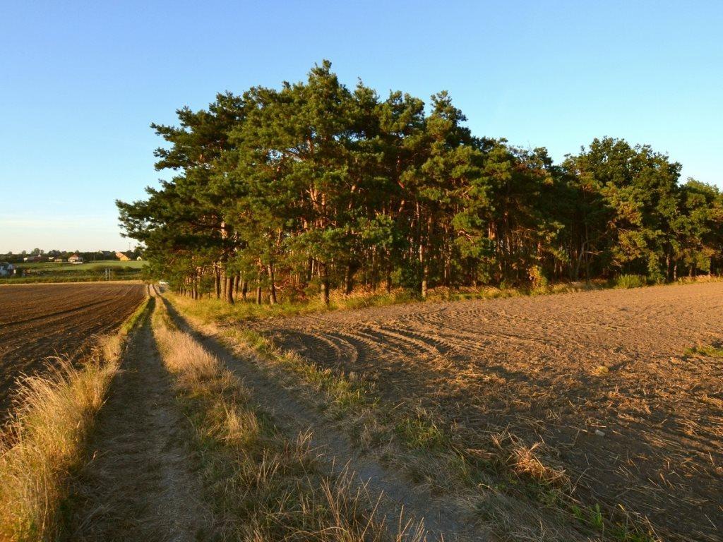 Działka leśna na sprzedaż Gogolin, Wygoda  25540m2 Foto 12