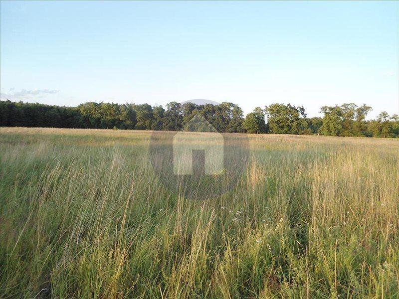 Działka rolna na sprzedaż Jaroszówka  14800m2 Foto 5