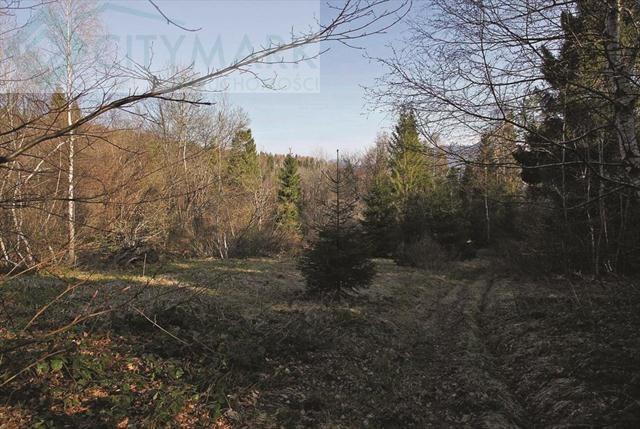 Działka inwestycyjna na sprzedaż Strzebowiska  9988m2 Foto 1