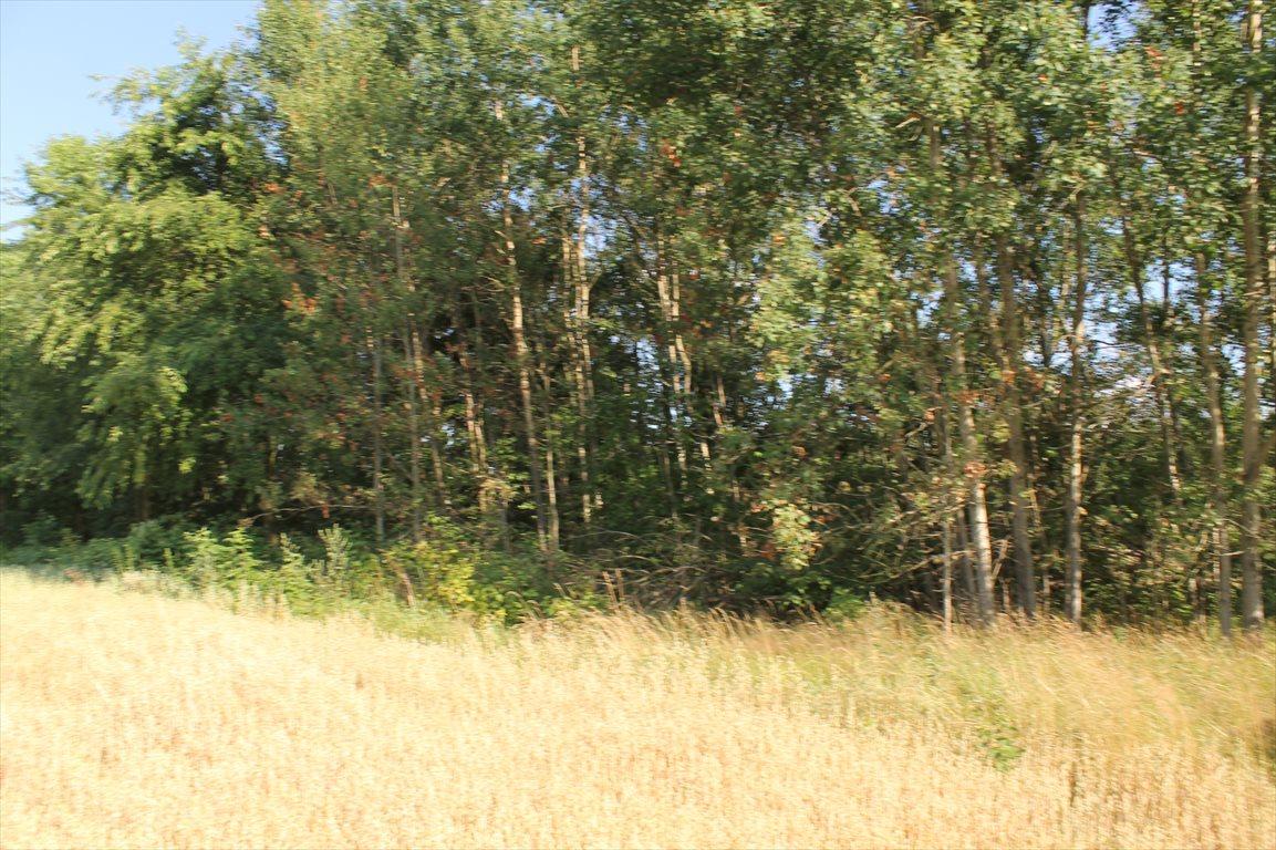 Działka rolna na sprzedaż Łagiewniki Nowe  9500m2 Foto 7
