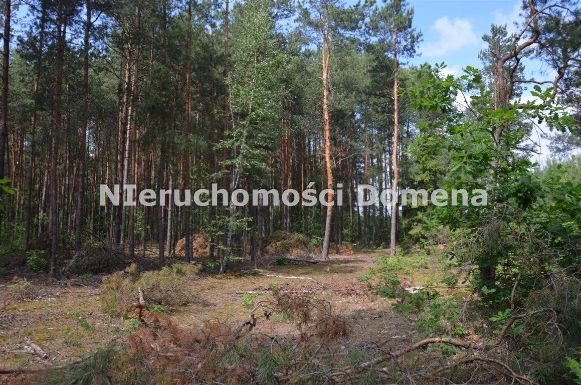 Działka leśna na sprzedaż Poświętne  2100m2 Foto 3