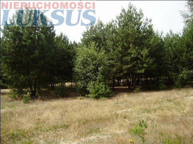 Działka rolna na sprzedaż Mirowice  5000m2 Foto 4