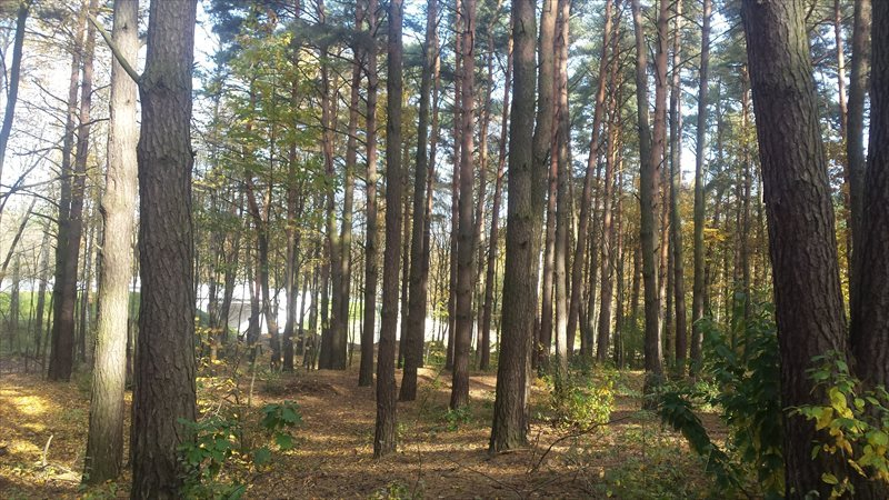 Działka leśna z prawem budowy na sprzedaż Piaseczno, Aleja Kalin  4746m2 Foto 2