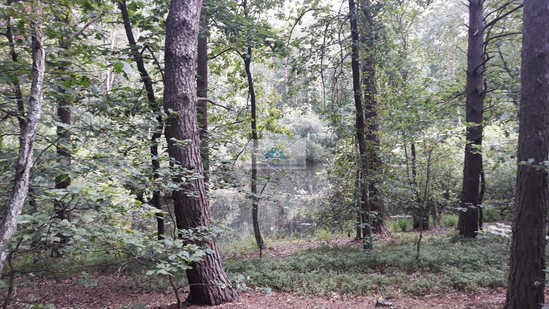 Działka leśna na sprzedaż Warszawa, Wawer, Międzylesie, Torfowa  3456m2 Foto 4