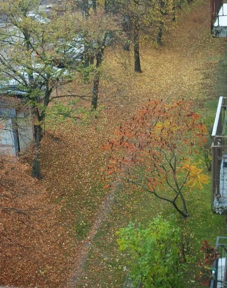 Mieszkanie trzypokojowe na sprzedaż Poznań, Winogrady, Os. Wichrowe Wzgórze  65m2 Foto 14