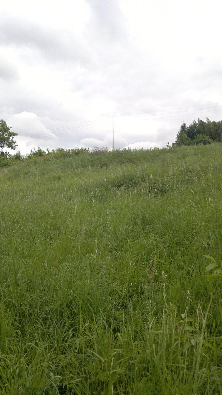 Działka budowlana na sprzedaż Niechobrz  7400m2 Foto 6