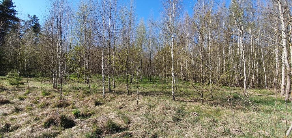 Działka leśna na sprzedaż Stary Cydzyn  8000m2 Foto 4