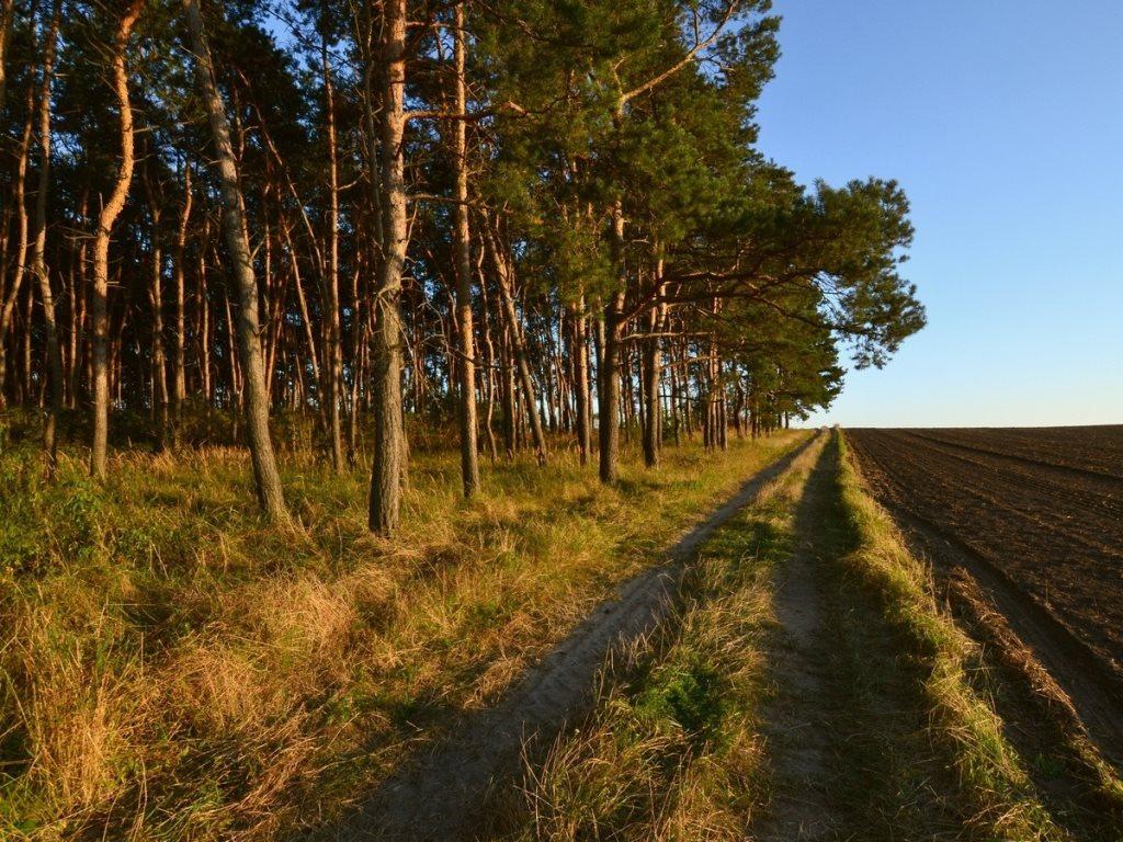 Działka leśna na sprzedaż Gogolin, Wygoda  25540m2 Foto 10