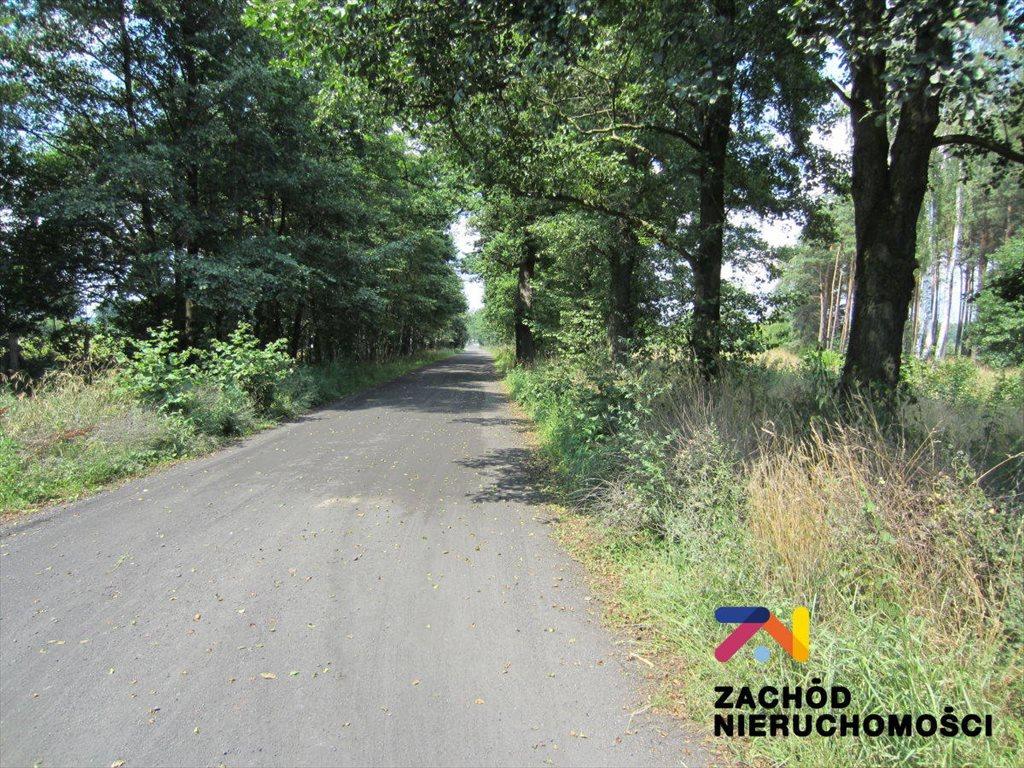 Działka budowlana na sprzedaż Zielona Góra, Ochla, Ochla  3300m2 Foto 1