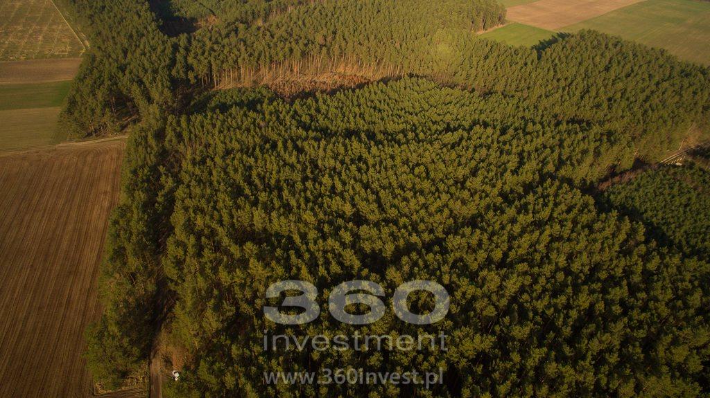 Działka leśna na sprzedaż Słonów  10800m2 Foto 7
