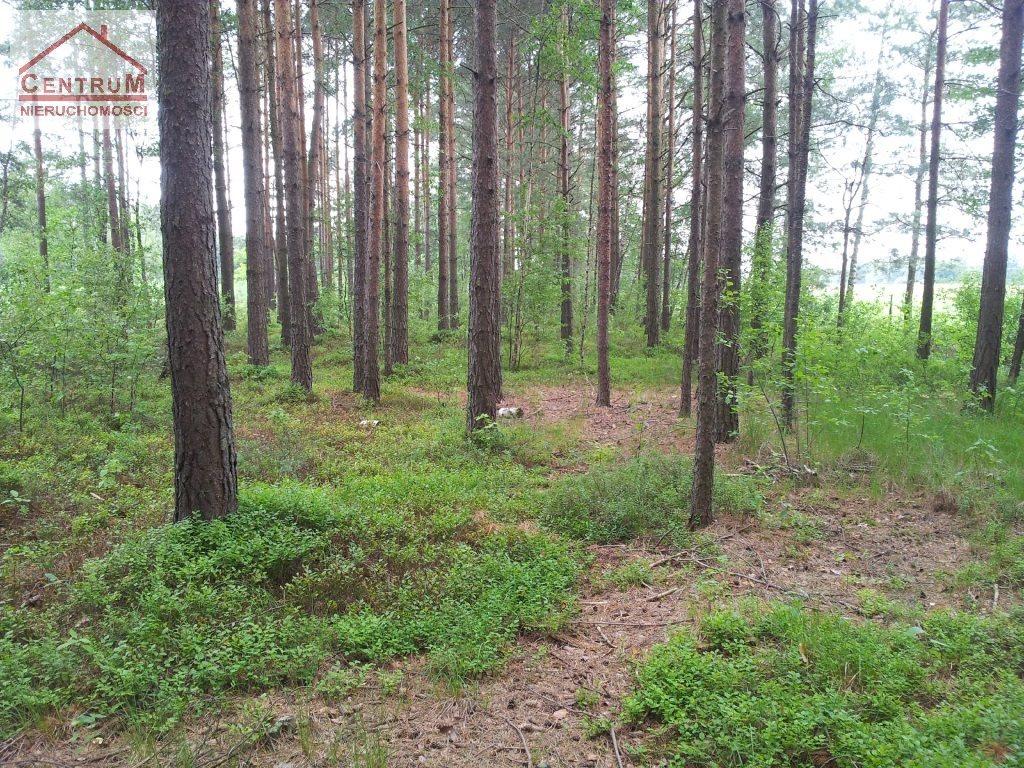 Działka leśna na sprzedaż Brzozowy Kąt  15375m2 Foto 2