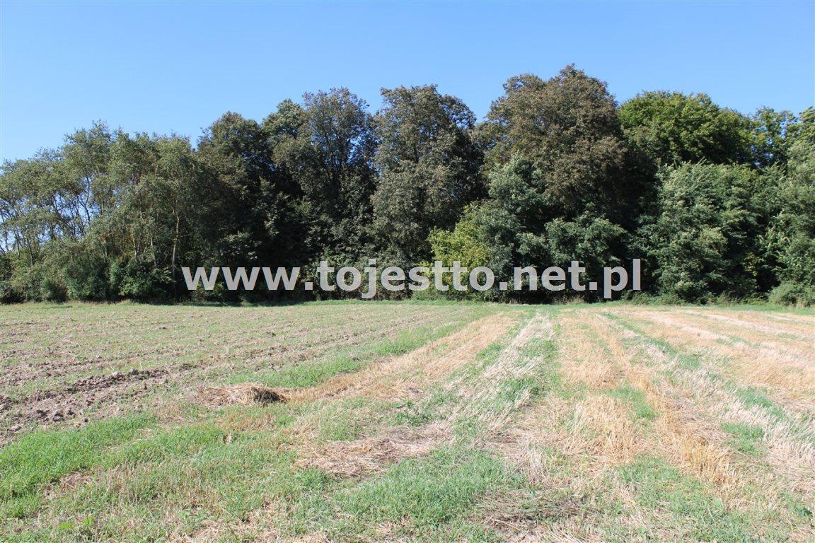 Działka leśna na sprzedaż Werbkowice  2500m2 Foto 3