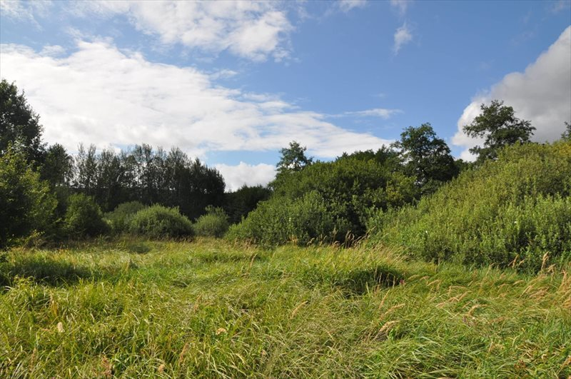 Działka rolna na sprzedaż Sulistrowice  4100m2 Foto 9
