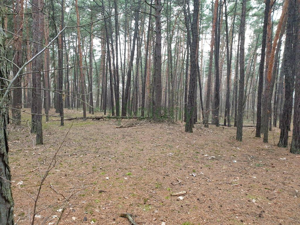 Działka leśna z prawem budowy na sprzedaż Sękocin-Las  2100m2 Foto 3