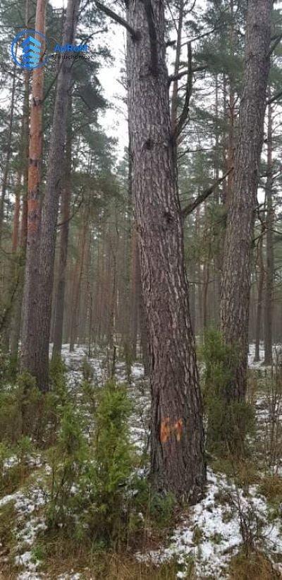Działka leśna na sprzedaż Olszowa Droga  20000m2 Foto 1
