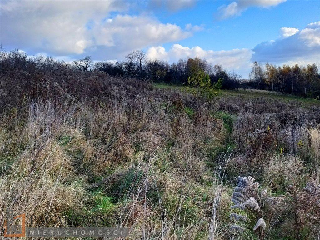 Działka leśna na sprzedaż Michałowice  5000m2 Foto 2