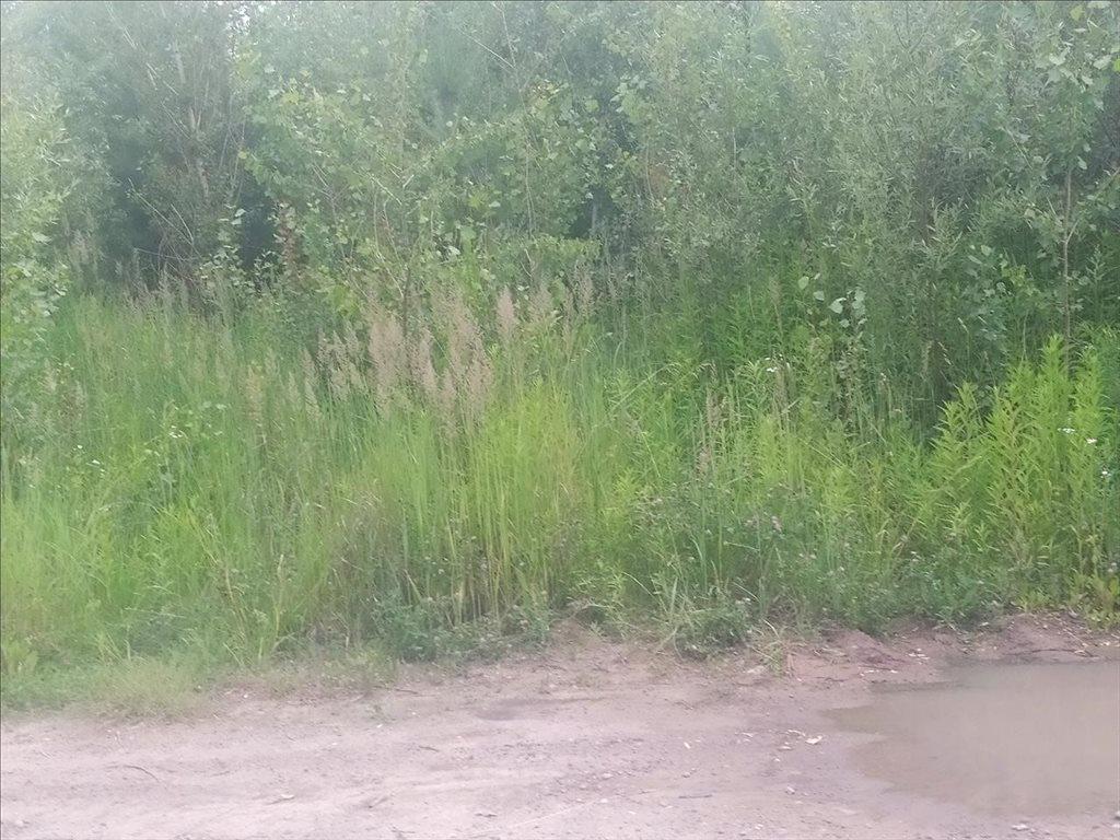 Działka rolna na sprzedaż Kępa Okrzewska, Konstancin-Jeziorna  4800m2 Foto 1