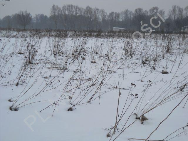 Działka rolna na sprzedaż Stare Budy  6000m2 Foto 3