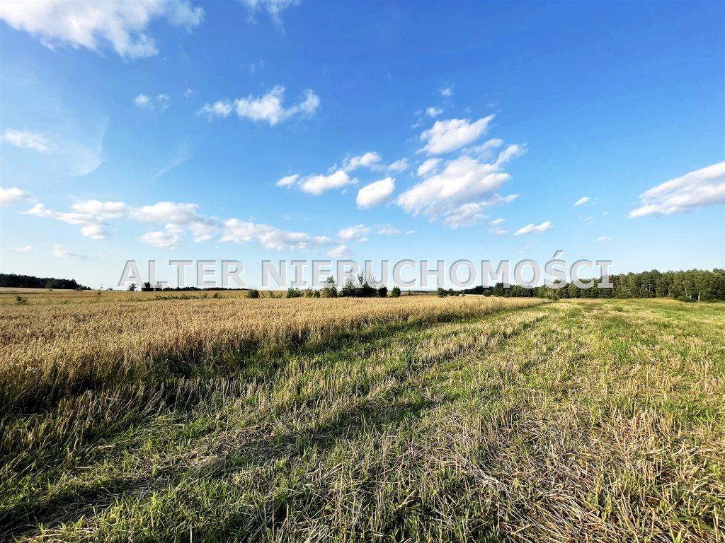 Działka rolna na sprzedaż Pawełki  8300m2 Foto 4