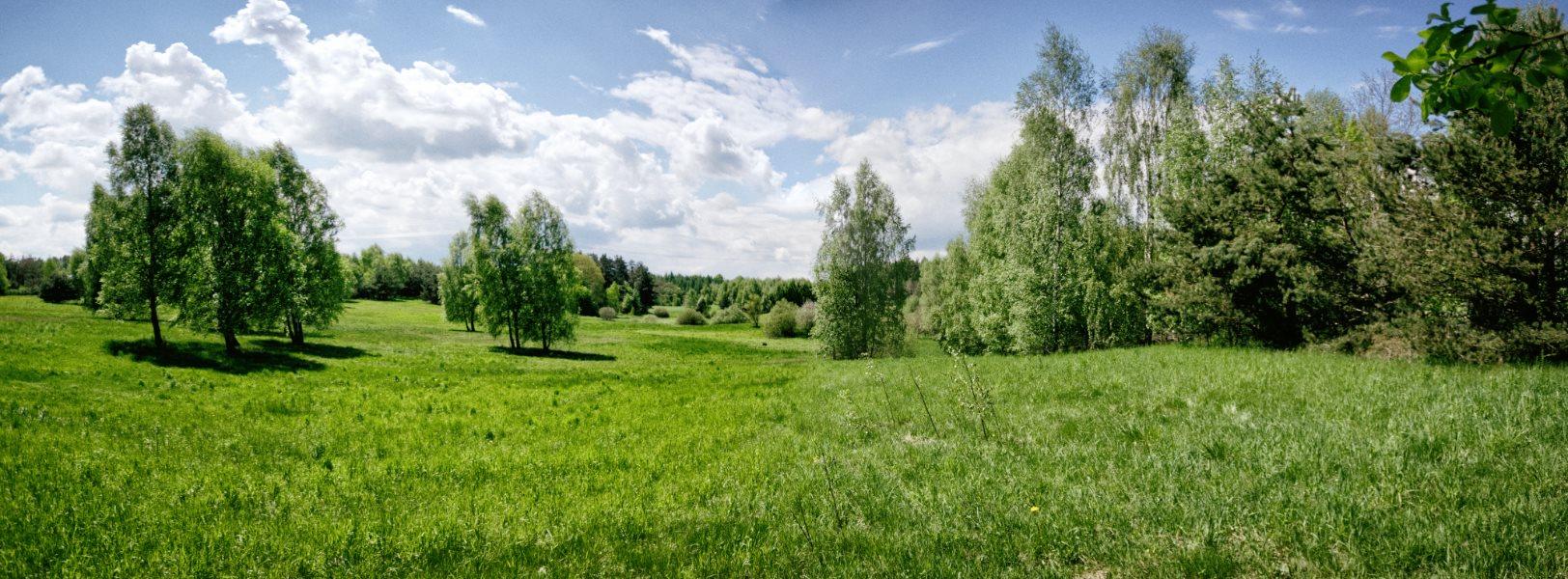 Działka siedliskowa na sprzedaż Graniczna Wieś  10072m2 Foto 1