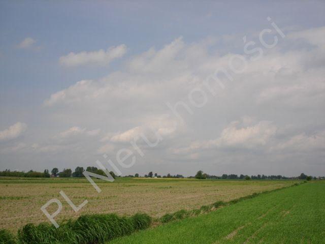Działka rolna na sprzedaż Holendry Baranowskie  15700m2 Foto 5