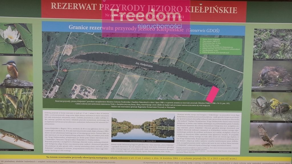 Działka siedliskowa na sprzedaż Kiełpin  9968m2 Foto 10
