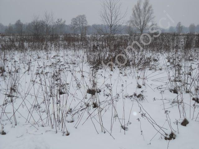 Działka rolna na sprzedaż Stare Budy  6000m2 Foto 4