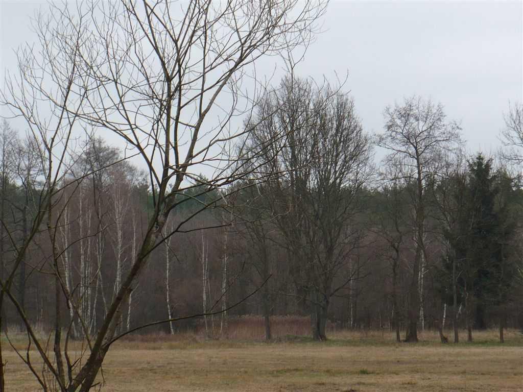 Działka rolna na sprzedaż Roztoka  31900m2 Foto 2